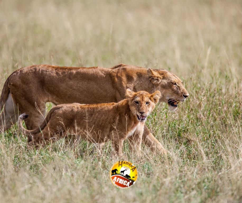 Safari_Tanzania_ (11)