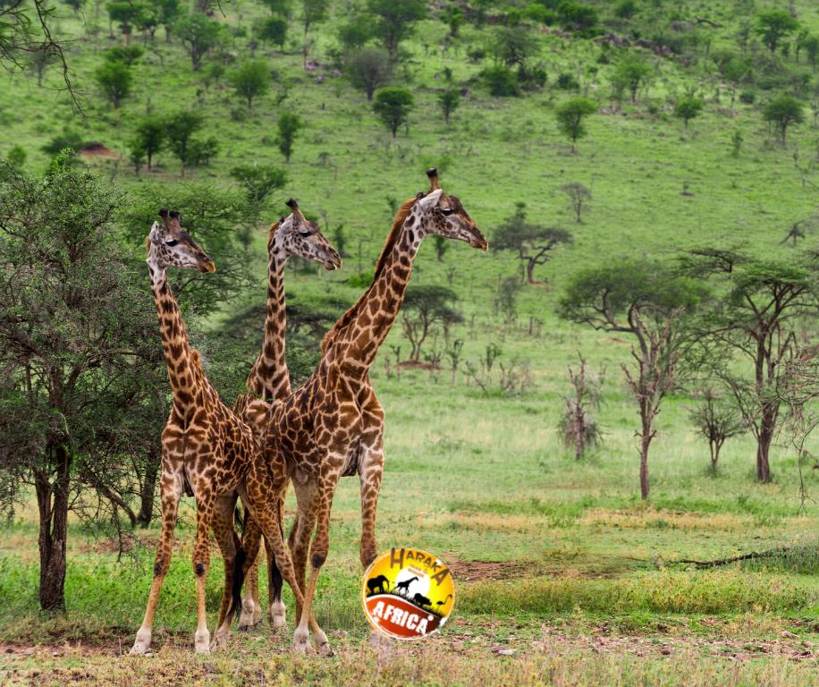 Safari_Tanzania_ (13)