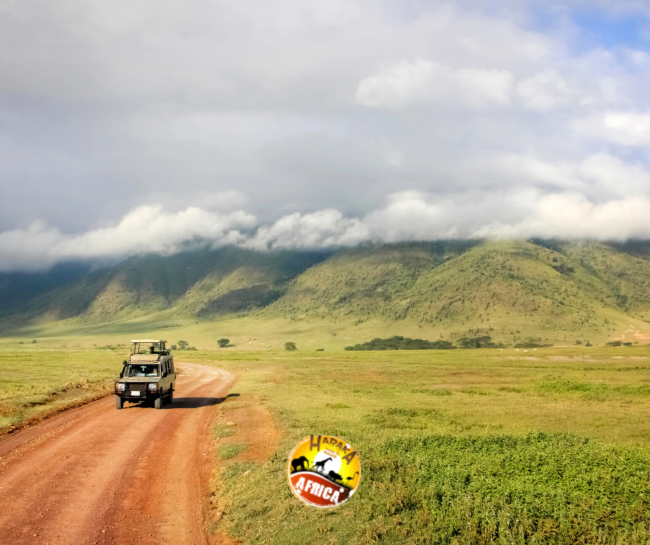 Safari_Tanzania_ (16)