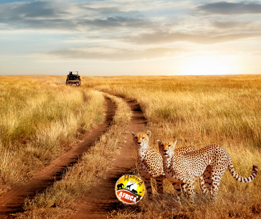 Safari_Tanzania_ (18)