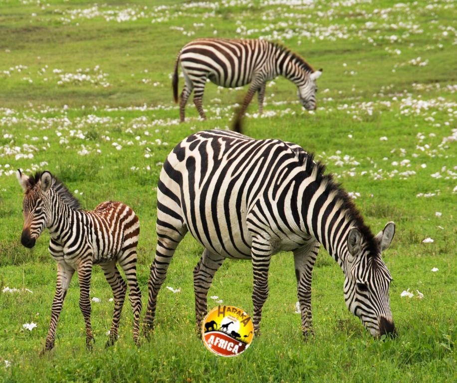 Safari_Tanzania_ (20)
