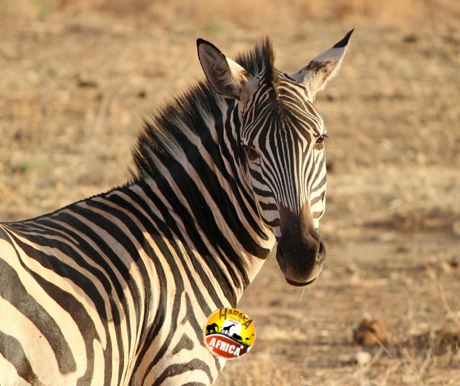 Safari_Tanzania_ (22)