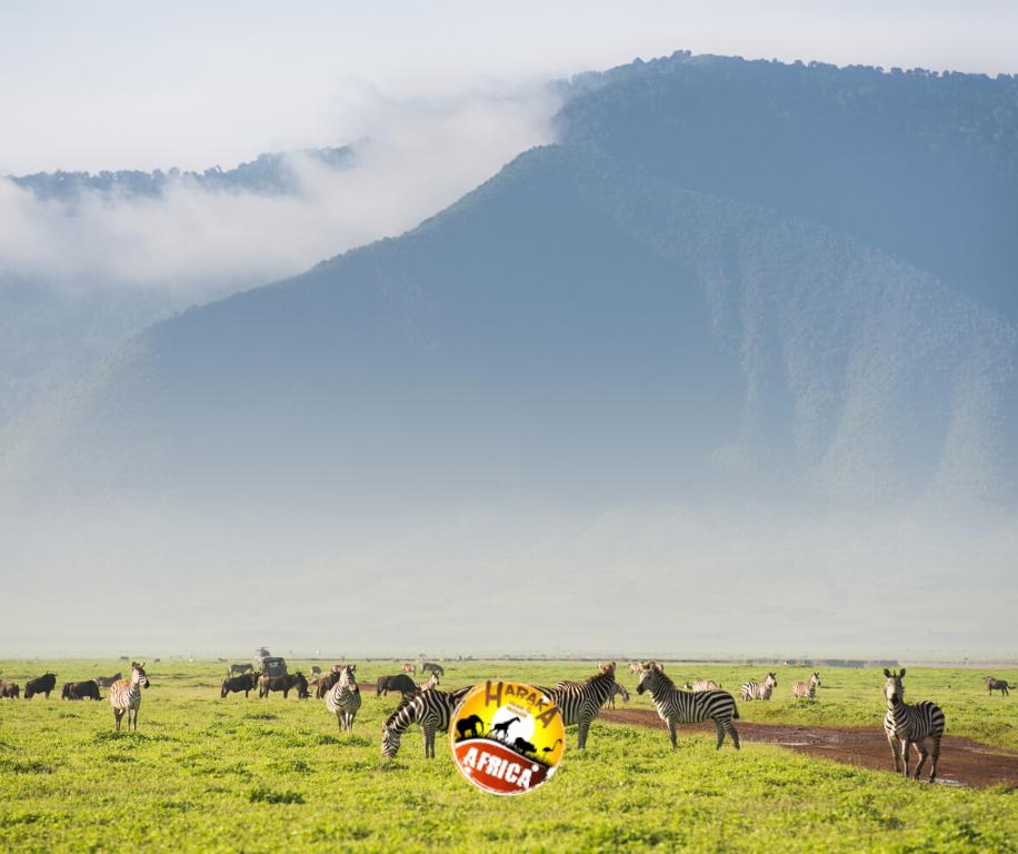 Safari_Tanzania_ (27)