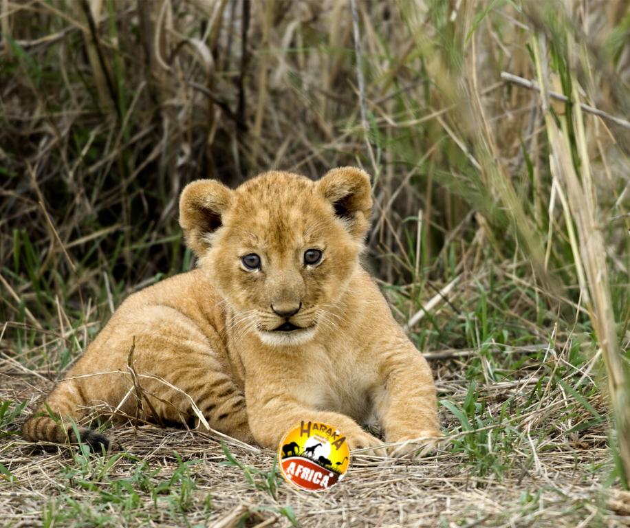 Safari_Tanzania_ (6)