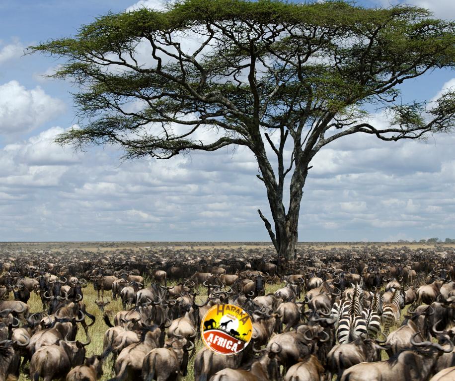 Safari_Tanzania_ Serengeti