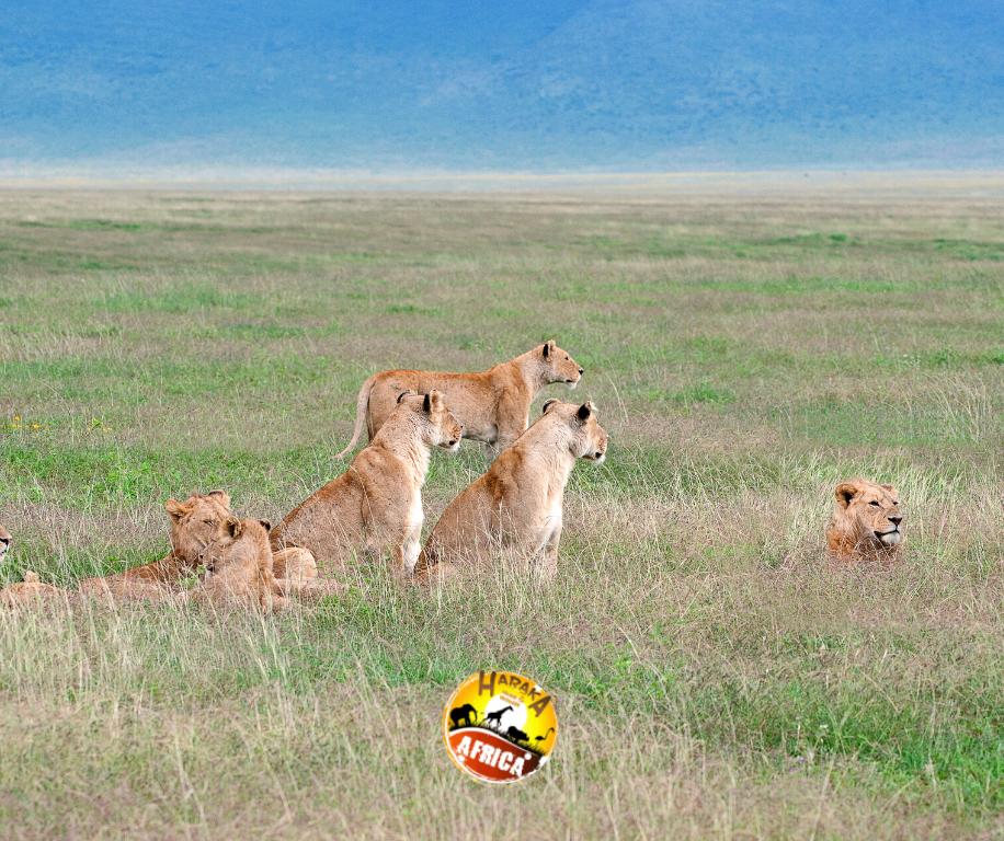 Safari_Tanzania_Cratere_Ngorongoro