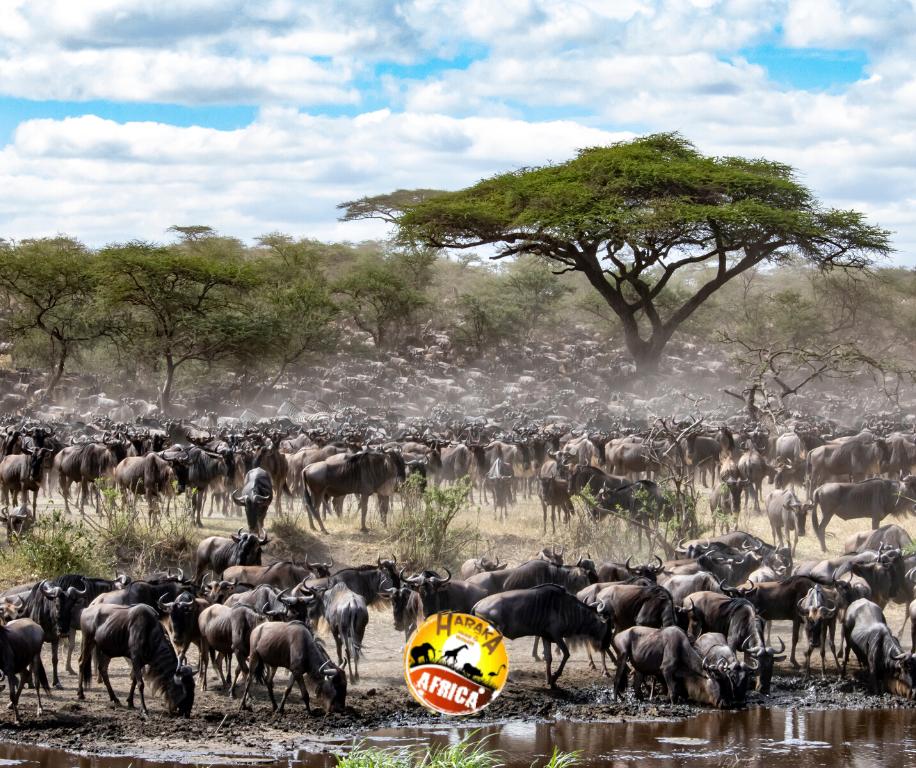Safari_Tanzania_Migrazione