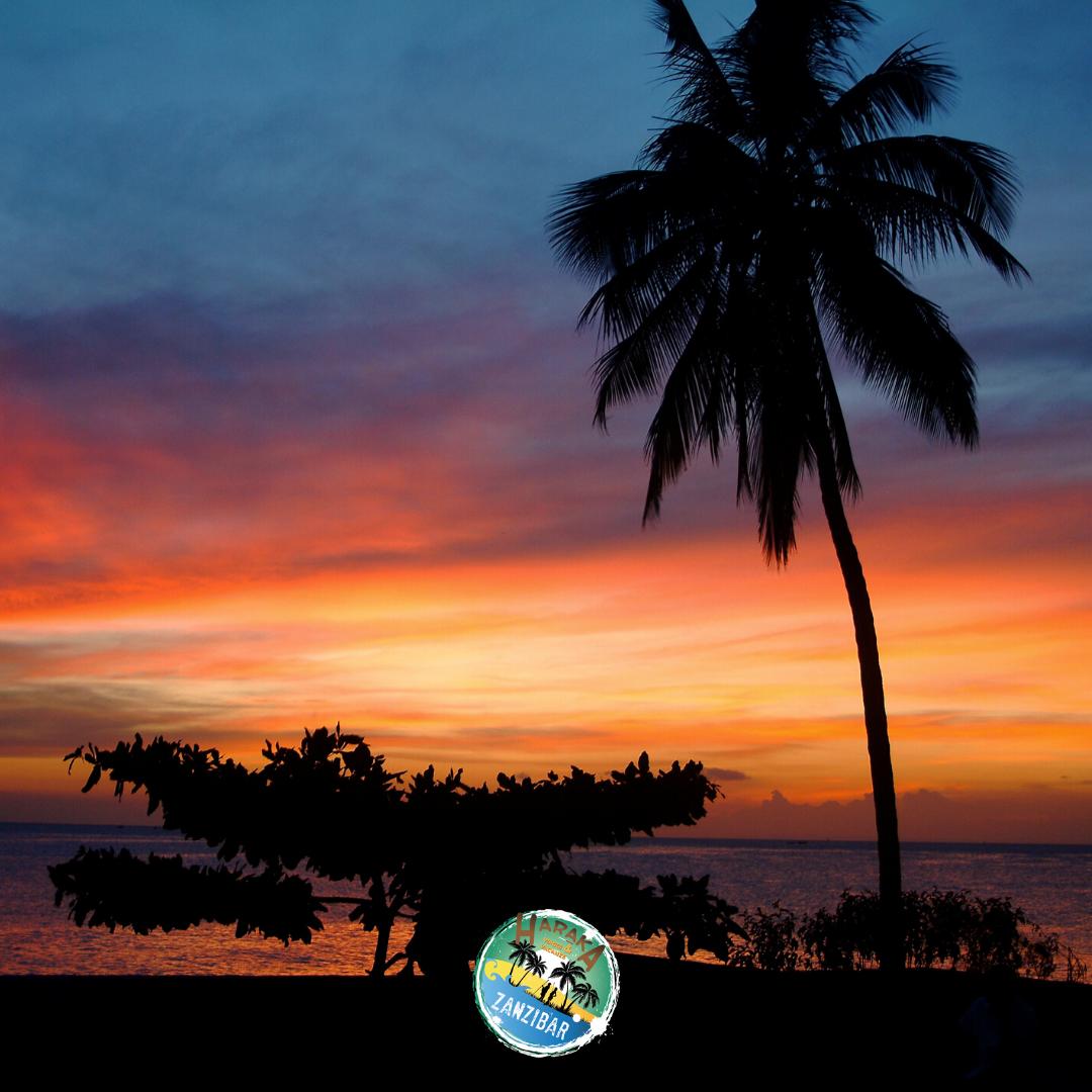 Vacanze_Zanzibar (19)