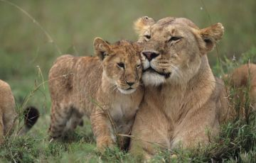 Kenya Settembre