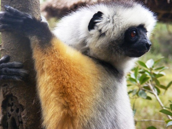 Madagascar Tour Est