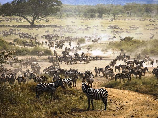 Safari Tanzania e Mafia