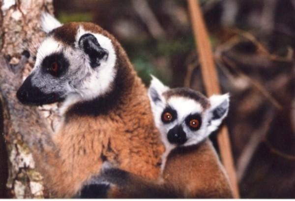 Tour Madagascar 5 giorni