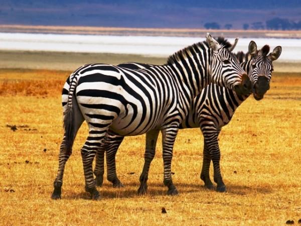 safari tanzania e pemba island