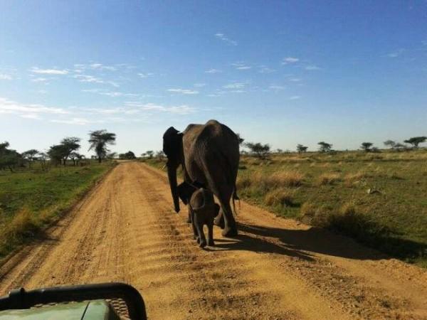 Safari Tanzania 4 Notti