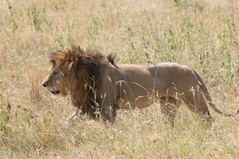 Safari Tanzania 2 notti