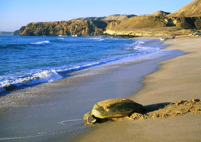 Tour Oman e Mare - Vacanze in Oman - Haraka Viaggi – Haraka Viaggi