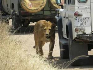 consigli un safari in tanzania