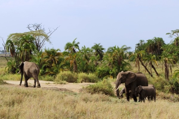 Safari Tanzania 7 notti