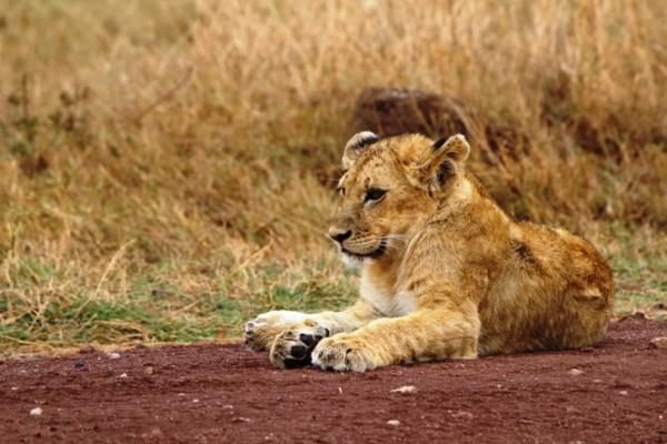 Safari 2 notti Kenya
