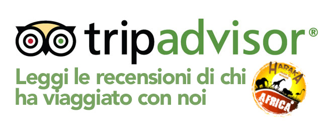 Trip-Advisor-Logo copia