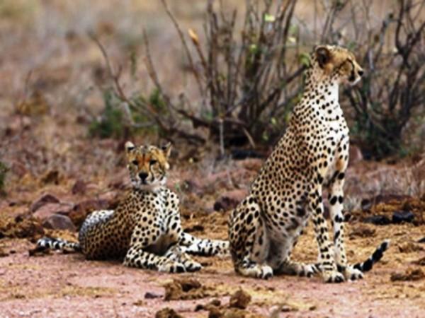 Safari 3 notti Kenya