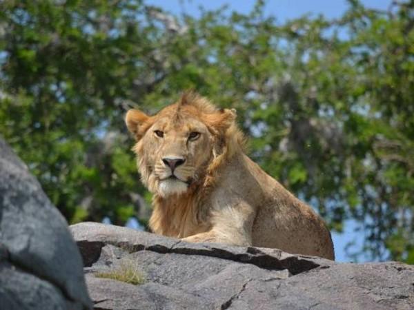 Safari e Zanzibar