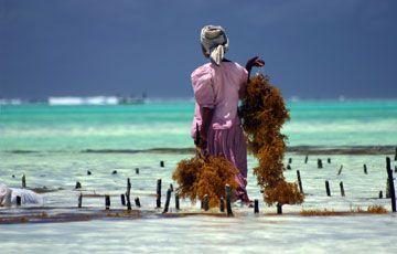Offerte Zanzibar Dicembre